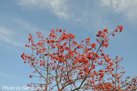 冬の青空に赤い実
