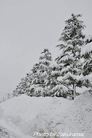 駐車場の雪