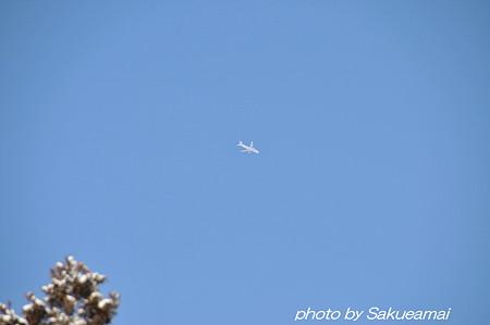 冬の青空の飛行機