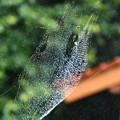 蜘蛛男爵のお屋敷