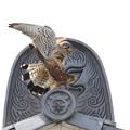写真: 7.チョウゲンボウ親鳥(交尾)044A2558