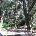 1.公園内の倒木(1)IMG_4849