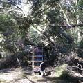3.公園内の倒木(3)IMG_4851