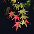 Photos: 松尾寺紅葉(3)FK3A1171