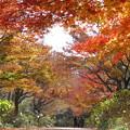 写真: 4.神戸市立森林植物園(1)IMG_7047