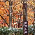 写真: 5.神戸市立森林植物園(2) IMG_7058 by ふうさん