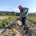 Photos: ジャガイモ掘り(2)IMG_6930