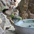 メジロ水浴び(3)FK3A3721