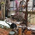 雪が溶けてしまったお庭の一画 IMG_0456