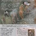 Photos: 野鳥の会(大阪支部)1月号2ページ目