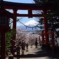 桜富士・02