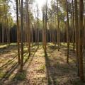竹林の里・03