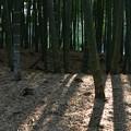 竹林の里・04