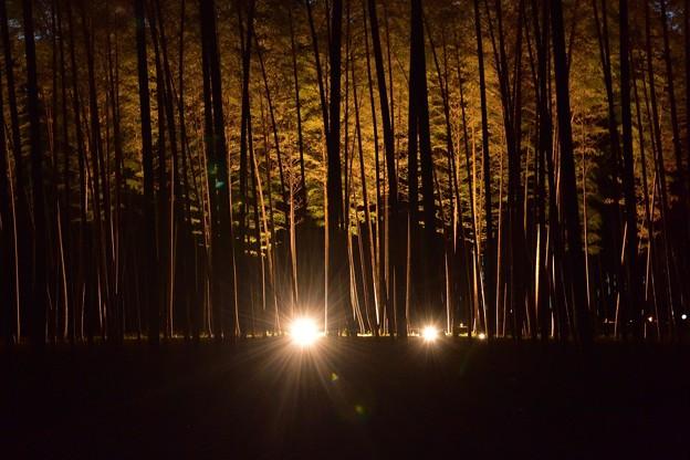 竹林の里・05