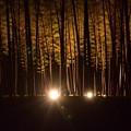 写真: 竹林の里・05