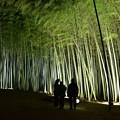 写真: 竹林の里・06