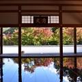 写真: 床もみじ・04