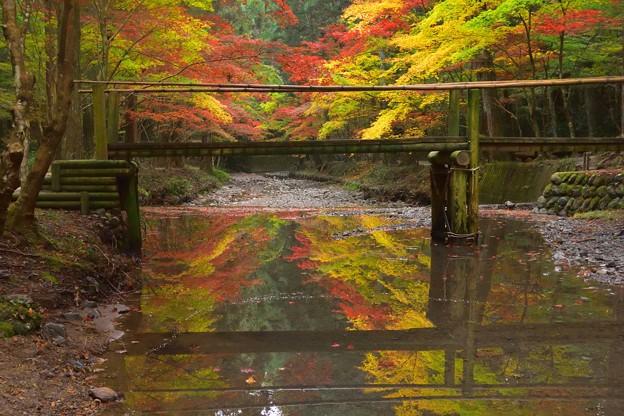 小国神社宮川沿いの紅葉・03