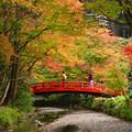 小国神社宮川沿いの紅葉・05