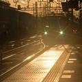 Photos: 冬~夕陽を浴びて・04