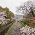 写真: 蹴上櫻花隧道