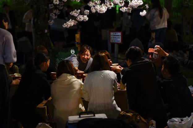 Photos: 円山公園賞夜櫻