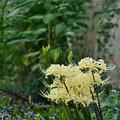 ヒガンバナが咲きました