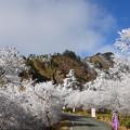 Photos: 帰路 男山を望む-2