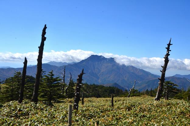 白骨林と石鎚山