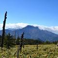 Photos: 白骨林と石鎚山