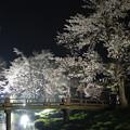 Photos: 忍野の桜