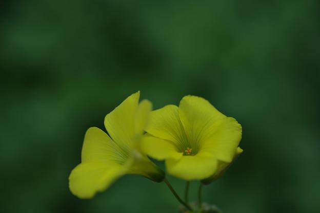 不自然な黄色