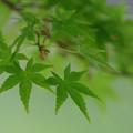 新緑シーズン2