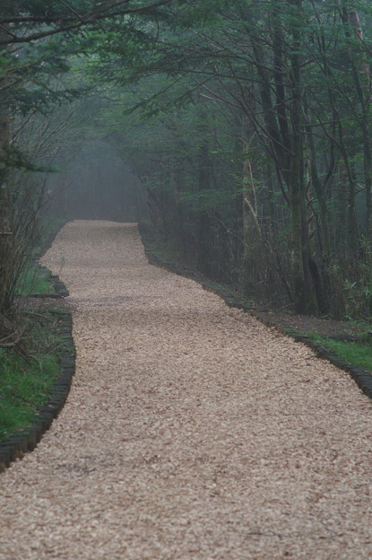 Woodchip Road