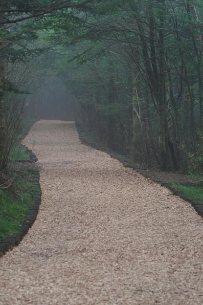 Woodchip Road
