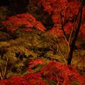 Photos: 紅葉まつり