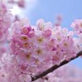 Photos: 春めき