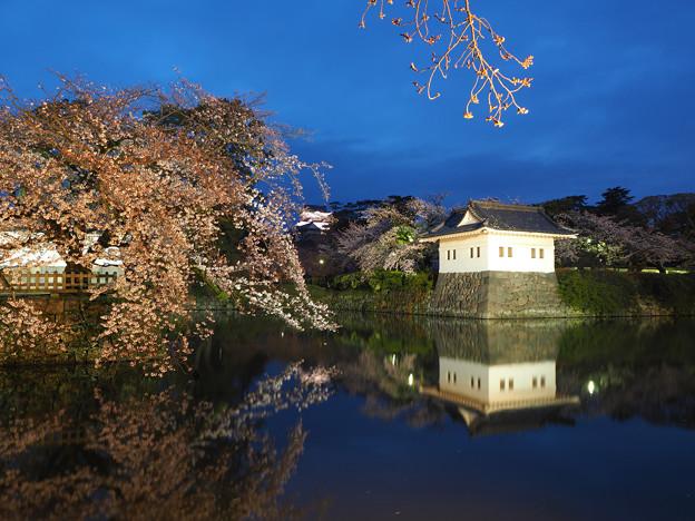 Photos: お城と桜
