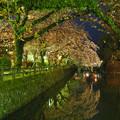 Photos: お堀の桜