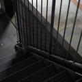 Photos: 闇夜の立駐