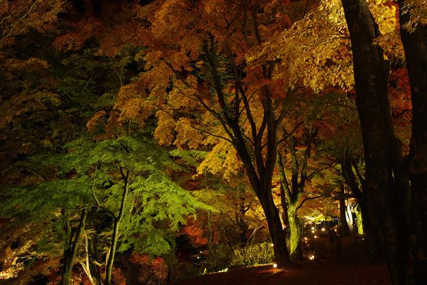 山中湖 夕焼けの渚 紅葉まつり2020