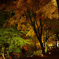 Photos: 山中湖 夕焼けの渚 紅葉まつり2020