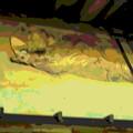 写真: 善福寺-本堂(長八の「こて絵」)a-2