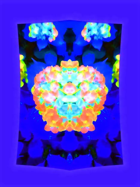 紫陽花_七変化-01a(1-5a)