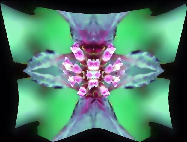紫蘇の花-04c