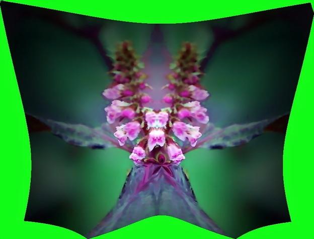 紫蘇の花-04b