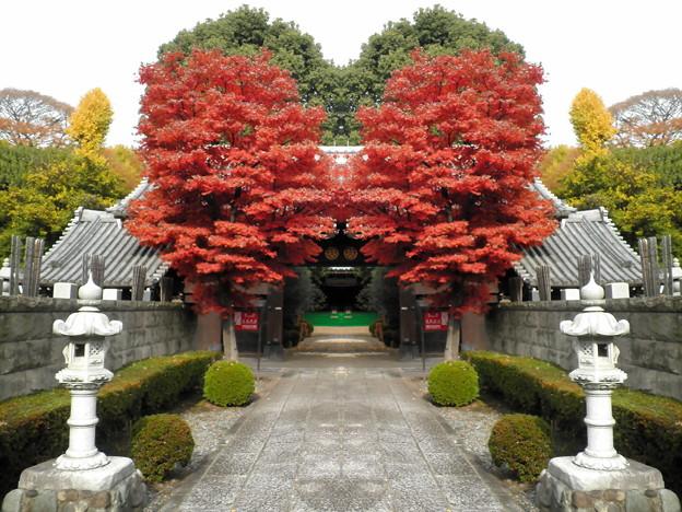 西澄寺-01a参道&武家屋敷門(1-2)
