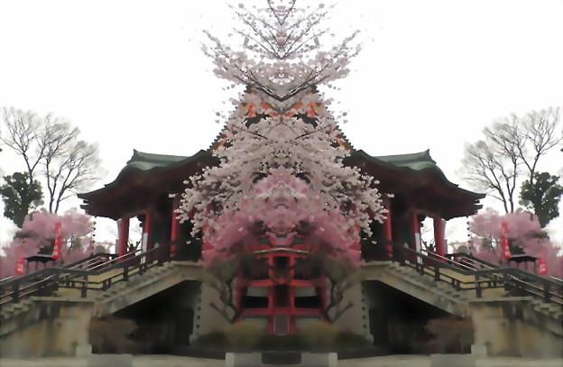 目黒不動尊-桜14b(1-1)
