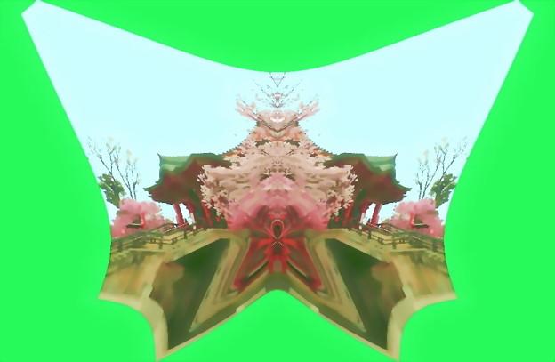 目黒不動尊-桜14b(1-6)
