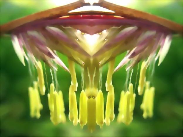 竹の花-02f